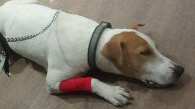 Dog Has Emergency Surgery After Eating Nintendo Cartridge